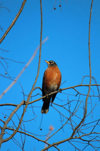 Animal Themes Animal Wildlife Vertebrate Animal Branch Bird Animals In The Wild One Animal Perching Tree Low Angle View Sky Plant Blue Nature Clear Sky No People Day Bare Tree Sunlight Outdoors