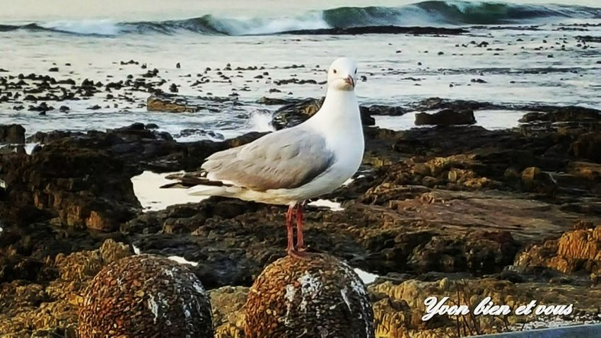what the f.... Seagull Yvonbien South Africa Front View Life View Trip Voyage Plage Mer Animals In The Wild Bird Animal Wildlife Water Animal Themes Sea One Animal Beach Nature Outdoors Beauty In Nature No People Day