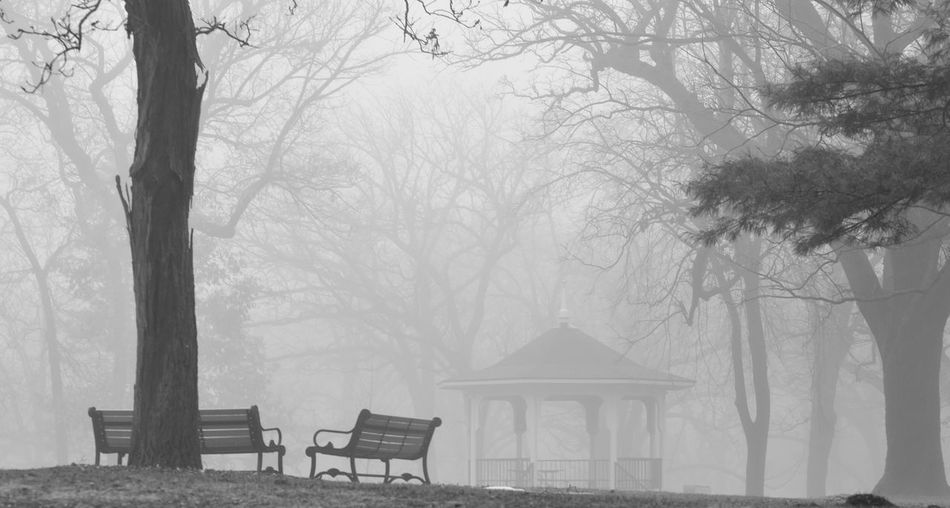 Empty benches by gazebo against bare trees at park during foggy weather