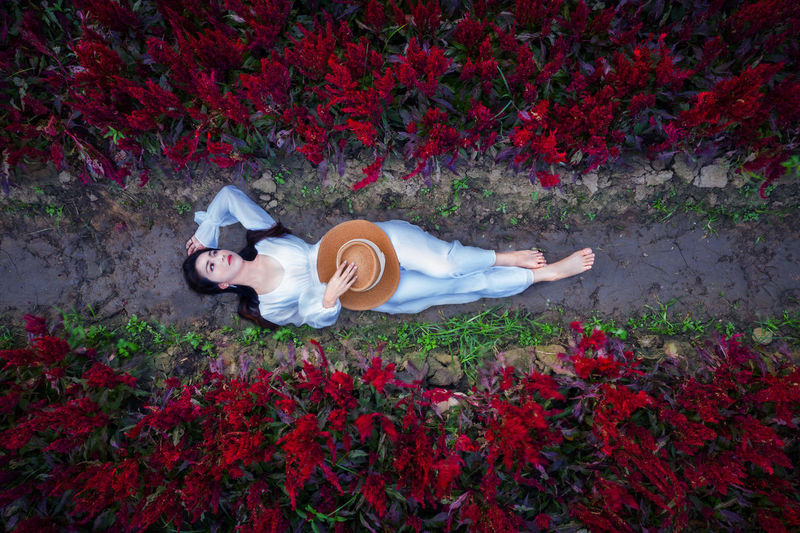 High angle view of woman lying down on red flowering plants