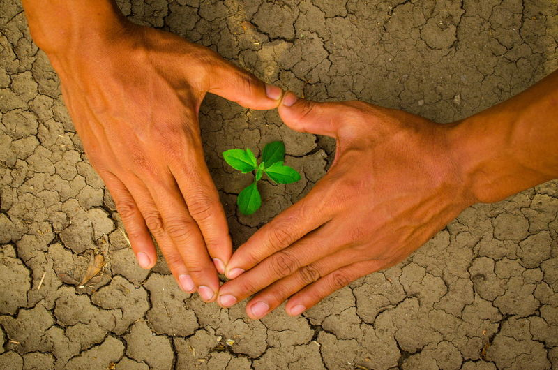 plant glowing on dry sand, Hope concept Drought Desert Hope Plant Barefoot Childhood Close-up Concept Cracked Day Dirt Dry Fragility Glowing Green Color Hand Heart Heart Shape High Angle View Human Body Part Human Hand Leaf Lifestyles Men Nature One Person Outdoors People Real People