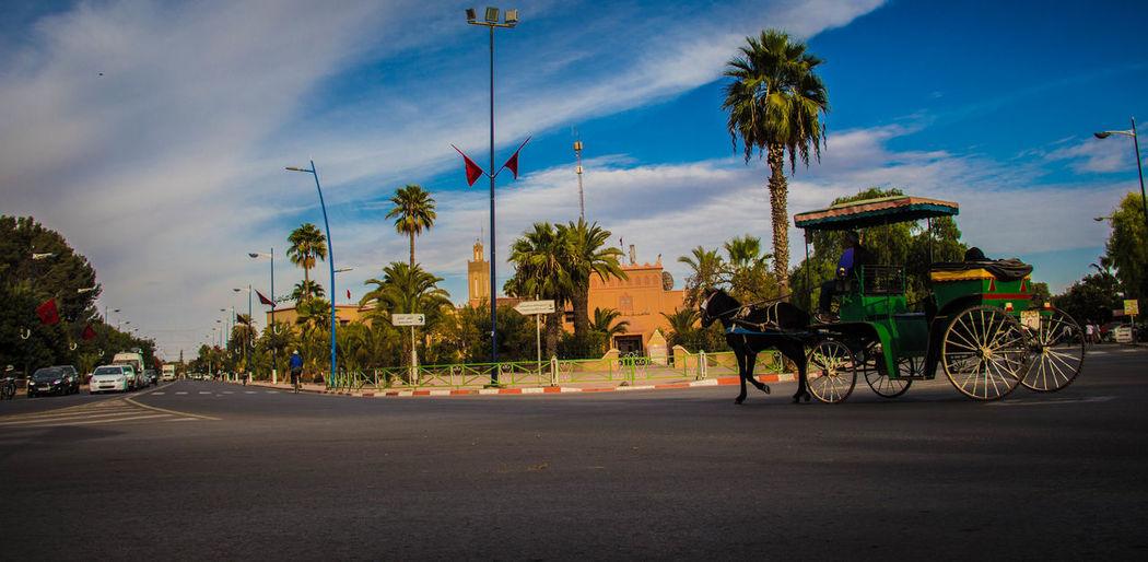 A picture of the Moroccan ,Taroudant city صورة من مدينة تارودانت المغربية Horse Cart Moroccan Morocco Arabic Day Horse Koutchi Maroc Taroudant Transportation المغرب تارودانت سوس ماسة كوتشي مغرب first eyeem photo