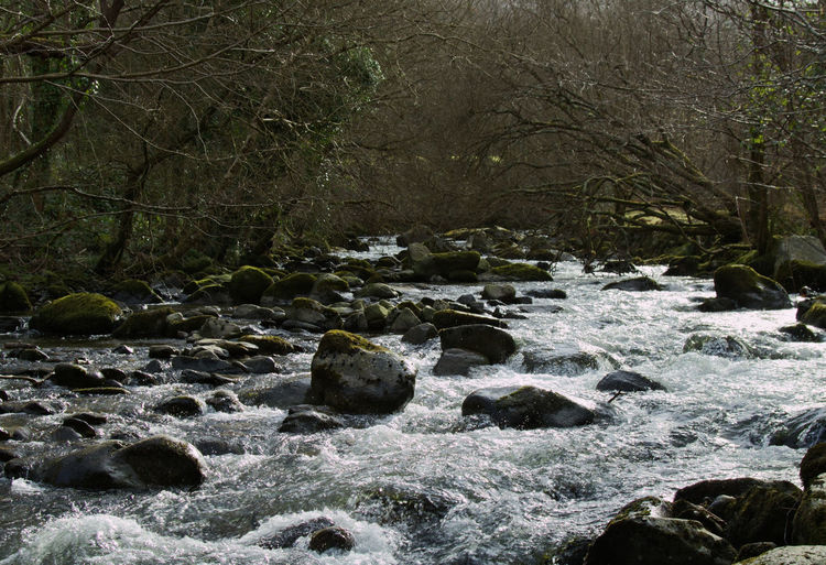 Wales Tree Forest Flowing Water Flowing River River Water Cold Temperature Winter Backgrounds Full Frame Close-up Flowing Woods WoodLand