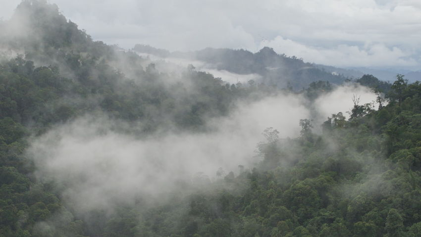 Beauty In Nature Day Fog Growth Landscape Lush - Description Mountain Nature Nature Reserve No People Outdoors Scenics Tree The Great Outdoors - 2016 EyeEm Awards No Edit/no Filter Sarawak Sarawakmalaysia Foggy Forest Flying High