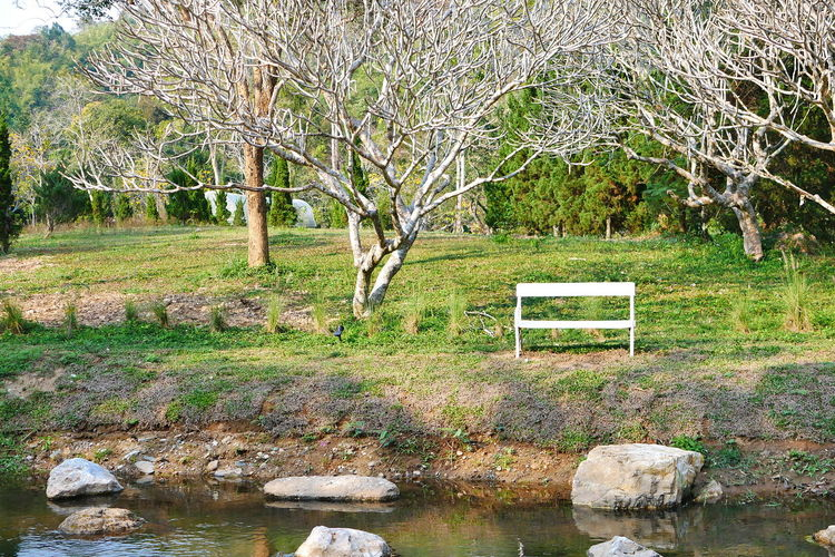 Park bench by lake