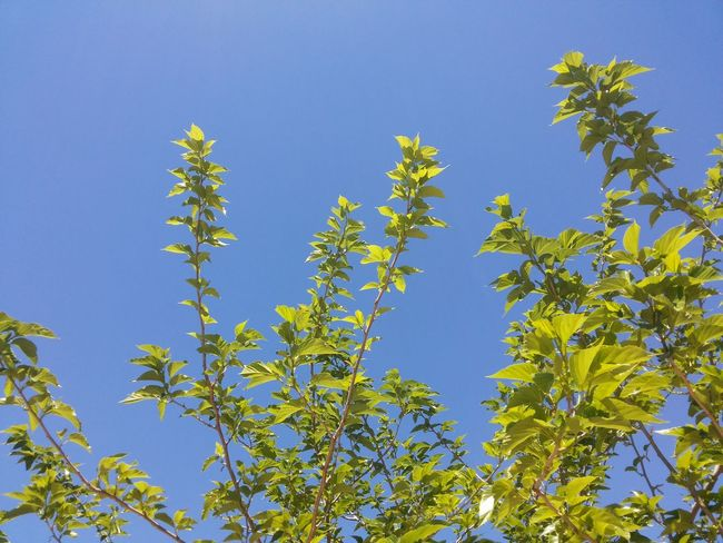Just one more perfect sunday. No tricks, no filters, no photoshop. Green Green Color Think Green Ecologic Tree Branches Green Leaves Spring Leaves Green Leaves Blue Sky Spring No Edit/no Filter Purist In Photography Fine Art Photography Colour Of Life