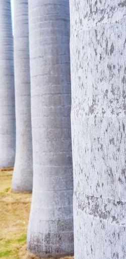 Allée de palmiers Guadeloupe Garden Nature Water Architectural Column Architecture Built Structure