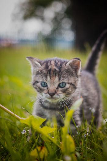 Portrait of kitten in a field