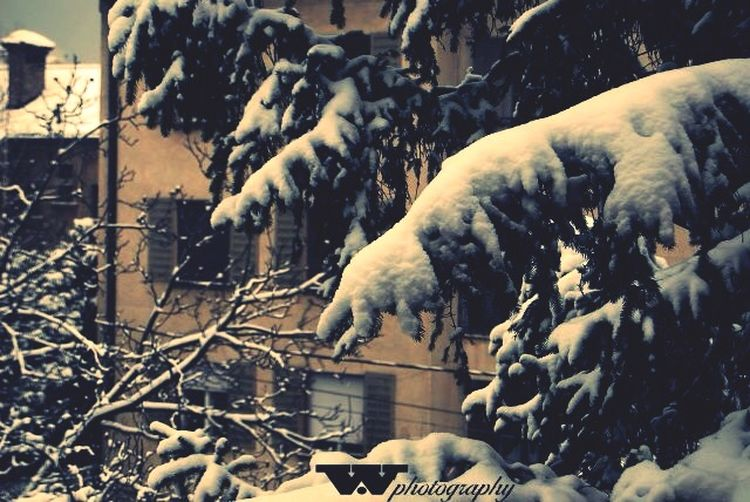 Snow Winter Wintertime Wphotography Trees Nature EyeEm Best Shots Photography Nature_collection EyeEm Nature Lover