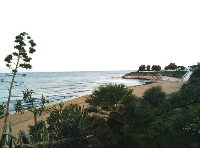 Sea Beach Tree Horizon Over Water Water Sand Nature Tranquility No People Day Sky Beauty In Nature Sicily Seascape