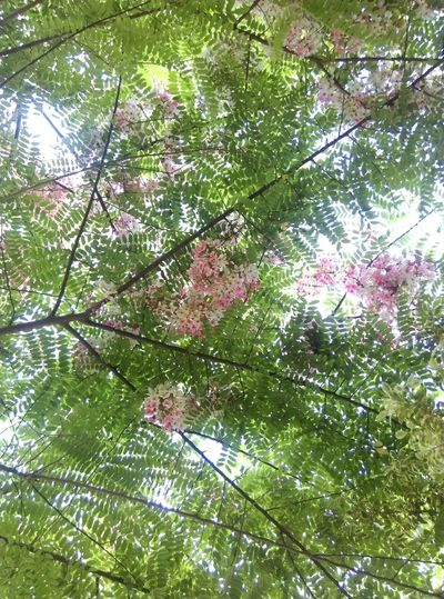 Growth Nature Tree Beauty In Nature Low Angle View Branch Day Flower Backgrounds No People Green Color Full Frame Outdoors Fragility Springtime Freshness Close-up Sky