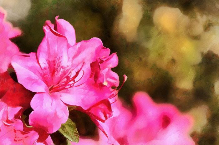 Beauty In Nature Blooming Close-up Day Digital Art Flower Flower Head Fragility Freshness Growth Nature No People Outdoors Petal Photo Manipulation Pink Color Plant Springtime