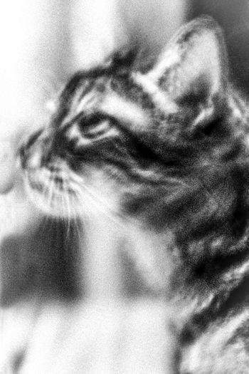 Black And White Blanco Y Negro Cat Gato Indoor Portrait Of A Cat Primer Plano Retrato