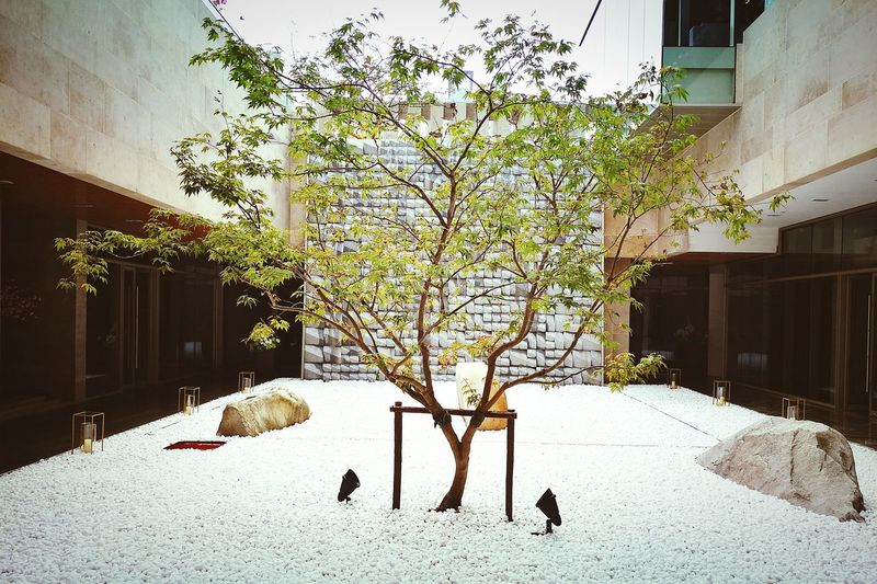 Tree Architecture Building Exterior Built Structure Season  Shadow Branch Day Outdoors Tranquility 嘉宝前滩后院