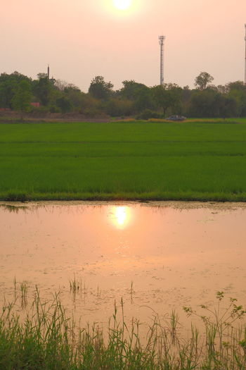 Scenic view of field by lake against sky during sunset