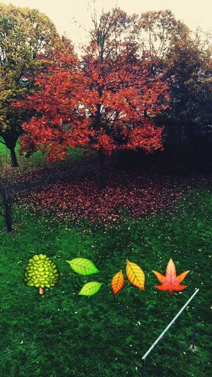 Hugging A Tree Leaves Walking Around