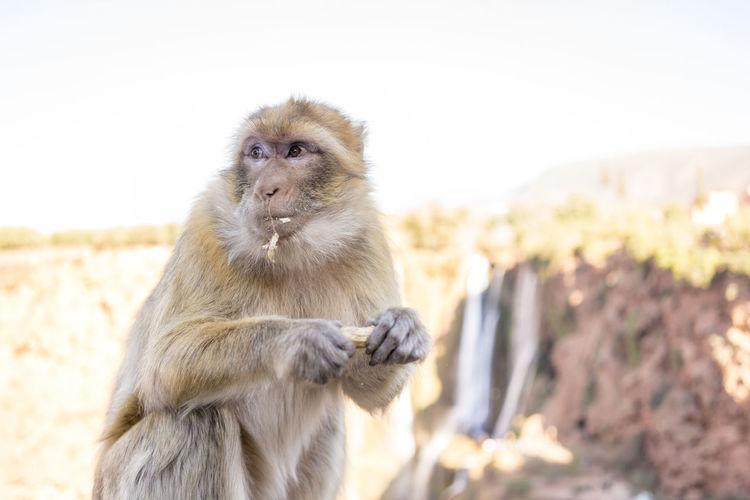 Portrait of monkey sitting on rock against sky