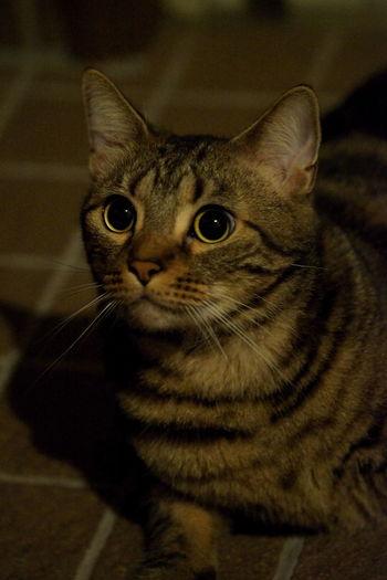 見つめていたい Cat