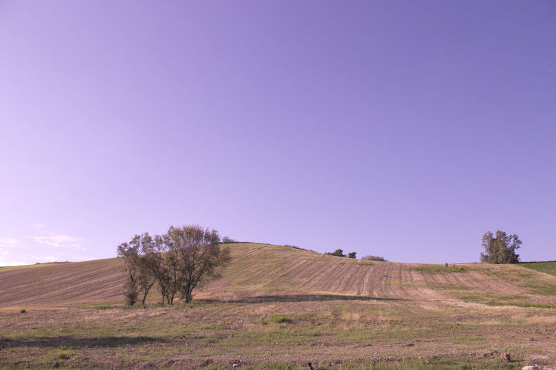 Landscapes in Marche Autumn Panorama The Week On EyeEm Tree Agriculture Backgrounds Beauty In Nature Day Field Grass Landscape Nature No People Outdoors Rural Scene Scenics Sky Sun Tranquil Scene Tranquility Tree