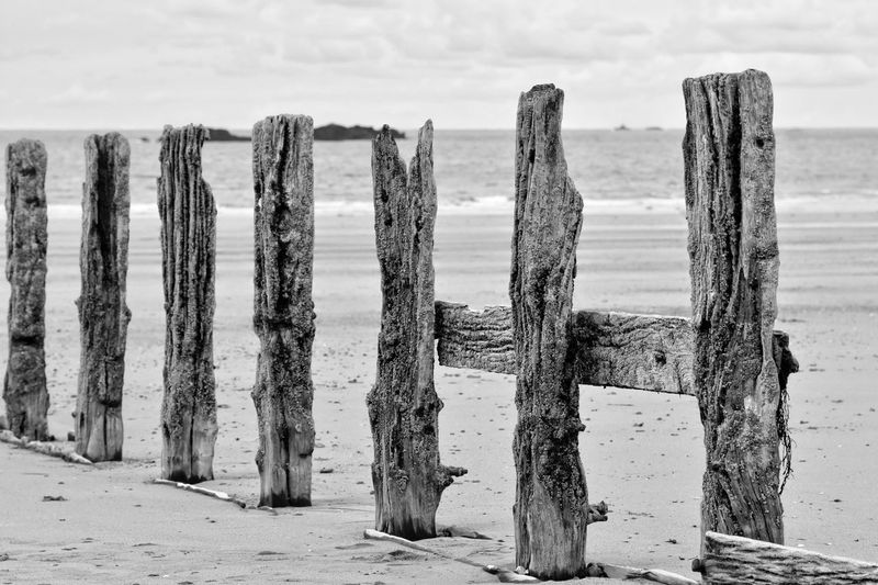 Beach Black And White Blackandwhite Coastline Eye4photography  EyeEm Gallery No People Non-urban Scene Scenics Sea Showcase July Showcase: July Tranquil Scene Wood - Material Wooden Wooden Post EyeEm Selects Black And White Friday
