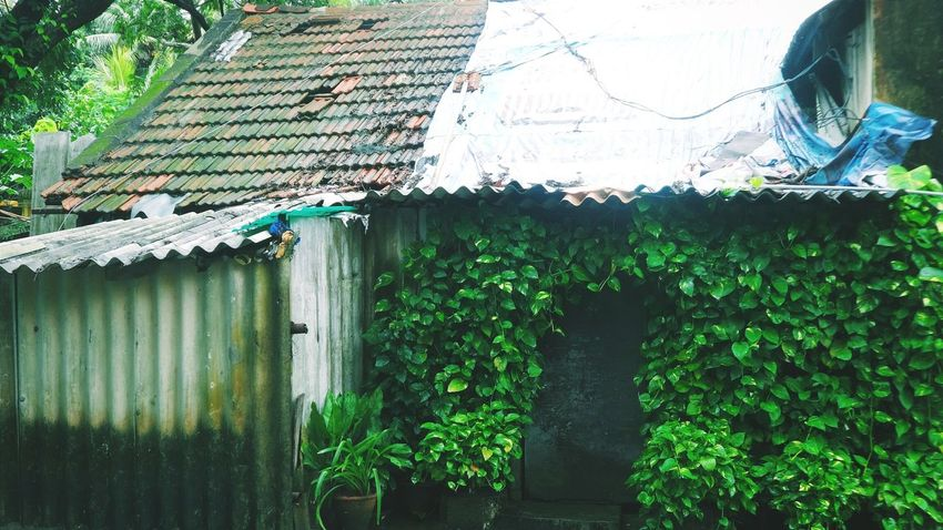 Small yet a beautiful house 😍 House Small Leaves Plants Tiled Roof  Hello World Localphotography Residence Cover Beautiful Planting Decoration From My Point Of View Sheets Bricks Tadaa Community Chennai Tamilnadu Lifestyle Coconut Trees Trees Hugging A Tree Rainy Days EyeEm Nature Lover Man Made Structure