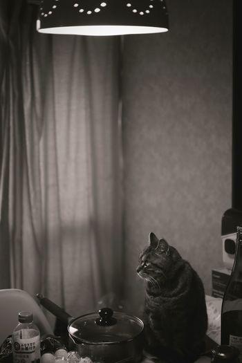 CAT Cat Canon5Dmk3 Leica Leitz KAWAII Elmarit 35mm Snapshot Japan