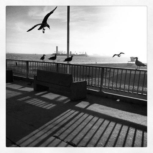 Birds Flying Sohigh