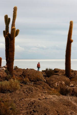 cactus Beauty In Nature Bolivia Cactus Cloud - Sky Day Landscape Nature One Person Outdoors Real People Rear View Saltflat Scenics Sky Uyuni The Secret Spaces