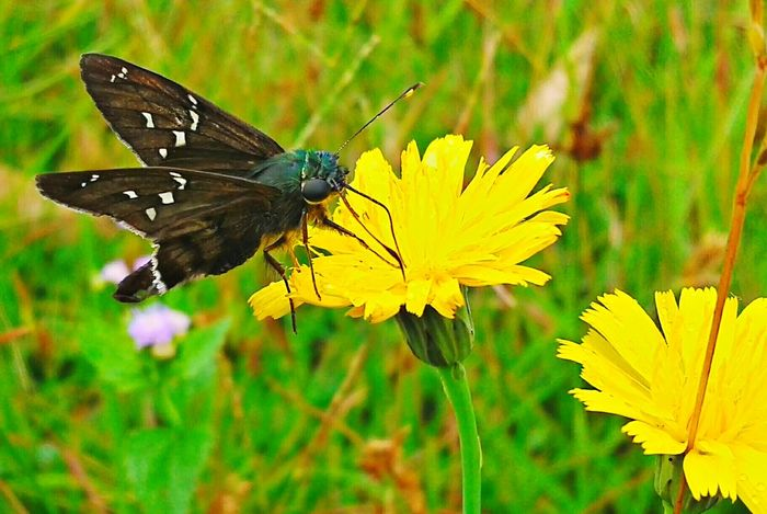 Natureza Perfeita♡♥ Flores Coisa De Deus Buterflyflowers Peruíbe