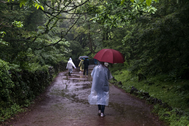 rainy day of Bijarim which is a famous forest in Jeju Island, South Korea Adult Adults Only Bijarim Day Footpath Forest Full Length JEJU ISLAND  Nature One Person One Woman Only Only Women Outdoors Pathway People Protection Rain Rain Rear View Road The Way Forward Tree Walking Wet Women