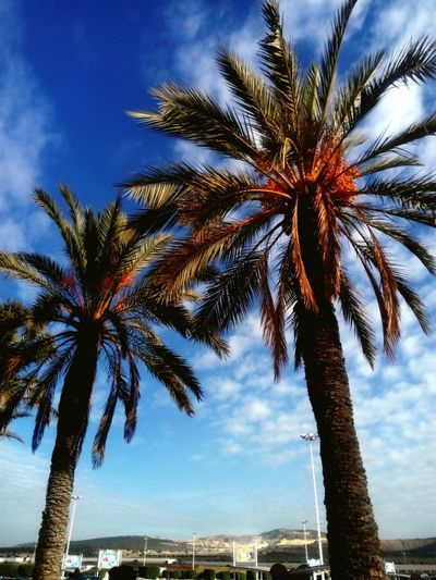 Palm Tree Tree Sky Outdoors Day Cloud - Sky No People Beauty In Nature Nature Low Angle View
