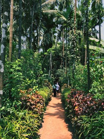 Tree Walking Forest Rear View Footpath Nature Full Length Day Growth Outdoors Real People Men Leisure Activity Beauty In Nature Togetherness Lifestyles People Adult Tree Area Adults Only The Great Outdoors - 2017 EyeEm Awards