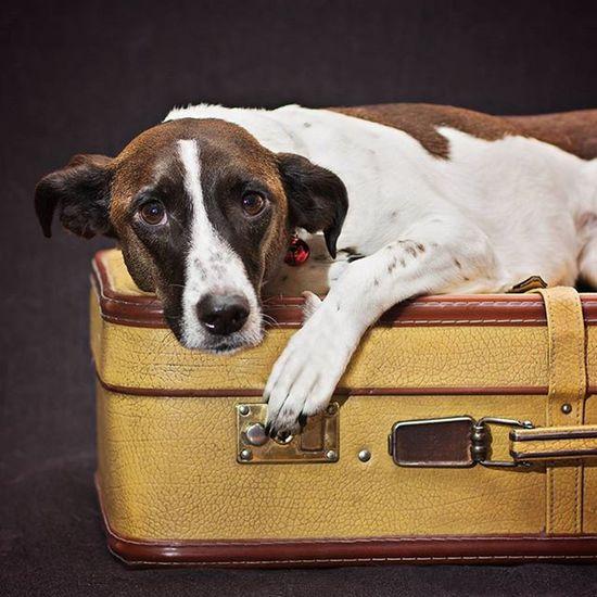 رفتن نزدیک است... اینجا حتی برای سگها هم آرامش ندارد... باید رفت Dog Love Dogs Pets Dogoftheday Coco Pet Photography  DogLove Dog Dog Traveller Dog With Suitcase On The Way EyeEmNewHere