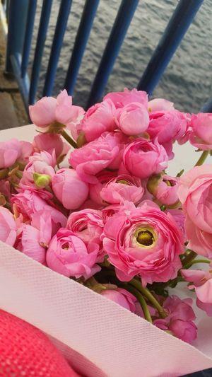 Flowers Nofilter EyeEm Best Edits Flowers,Plants & Garden Spring Flowers Spring EyeEm Flower