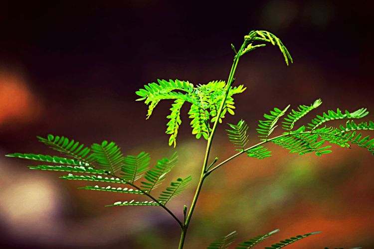 Bokeh Green Nature Wild Jungle Grain Plant Sapling Rejuvinating Refresh Bokeh Photography The Photojournalist - 2016 EyeEm Awards Perspectives On Nature