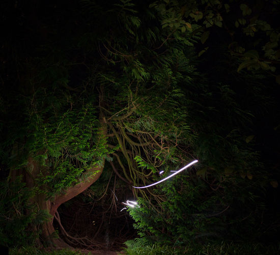 Plants growing in forest at night