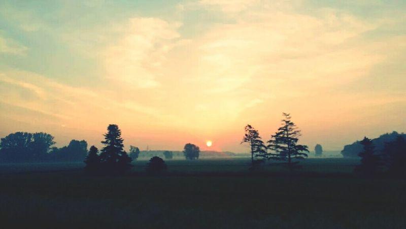 Nice summer morning Summer Summertime Foggy Morning Dawn Of A New Day Dawn Trees Sun Brunswick Braunschweig