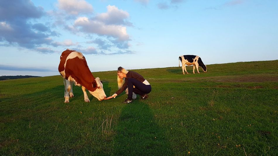 Cow Feeding Animals Animals Pets Togetherness Rural Scene Bonding Friendship Full Length Field Agriculture Sky HUAWEI Photo Award: After Dark #urbanana: The Urban Playground Be Brave EyeEmNewHere
