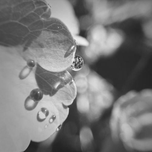 Blackandwhite Waterdrops EyeEm Best Shots SquidCam