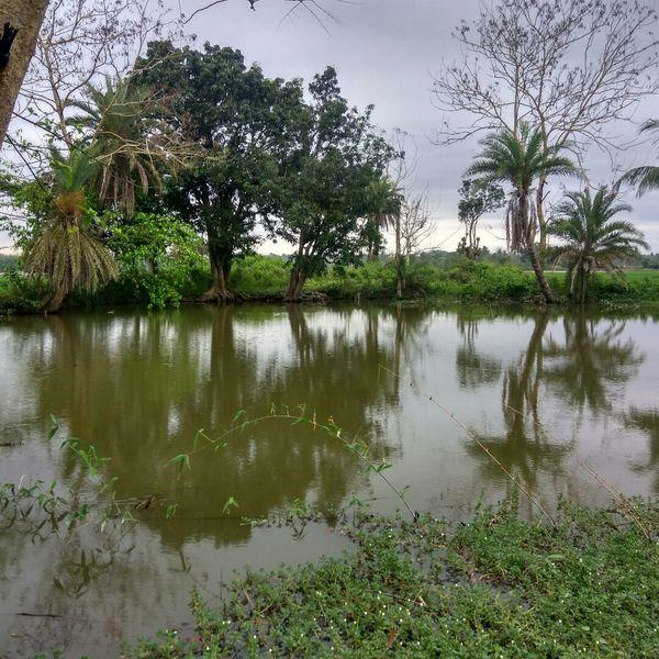Tripura Water Trees Water View Art Is Everywhere