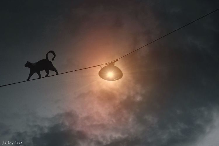 Hanging Out Hello World Nature Deutschland Light And Shadow My Best Photo 2015 Photography Taking Photos Old But Awesome Kiel Sky Alone Animals Cats Interesting 🌹❤️🌸