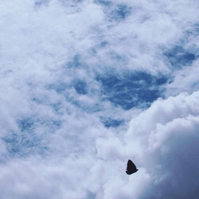 Flying high 🕊 Cloud - Sky Bird Flying Spread Wings Animal Wildlife Nature Low Angle View Beauty In Nature
