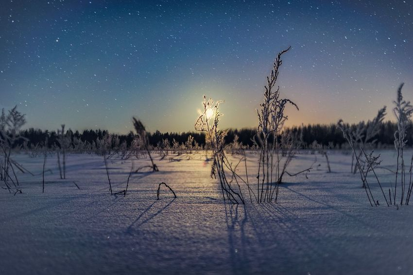 Nature Cold Temperature Tranquility Winter Tranquil Scene Beauty In Nature Night Snow Scenics Outdoors Bare Tree Sky No People Star - Space Landscape Astronomy