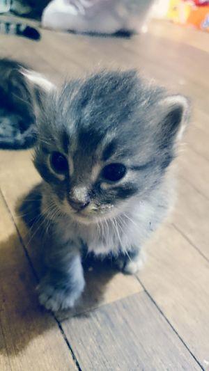Hello World Taking Photos Kittens