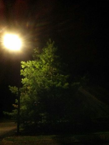 Pinetree Spotlight Amber Light Light And Shadow Nightphotography No Edits No Filters