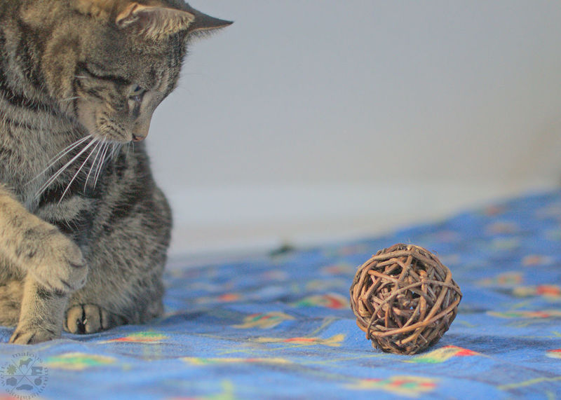 Playing cat No People Indoor Photography Domestic Cat Tabby Cat Tiger Katze Cat Pets One Animal Ball Toy Spielzeug Play Playing Spielen