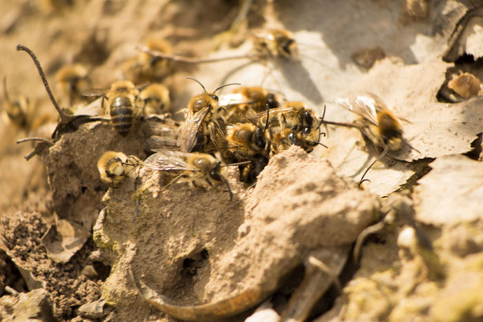 Bee 🐝 Bees Animal Themes Animal Wildlife Animals In The Wild Bee Close-up Day Insect Large Group Of Animals Nature No People Outdoors Sunlight