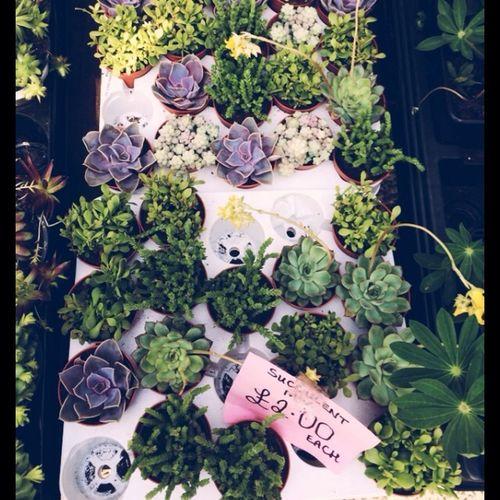 Plants Plant Sale Catus