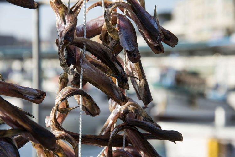 Close-up of fish drying on rope