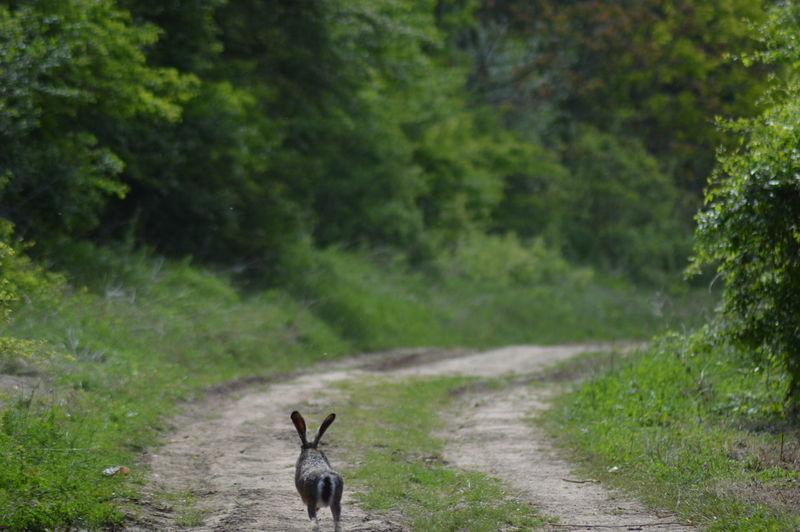Run, run rabbit